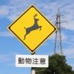 シカ、猿、イノシシなど…「動物注意」の標識は何種類ある?