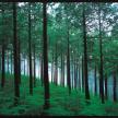 地球と、クルマと、共棲する「家」ー住友林業